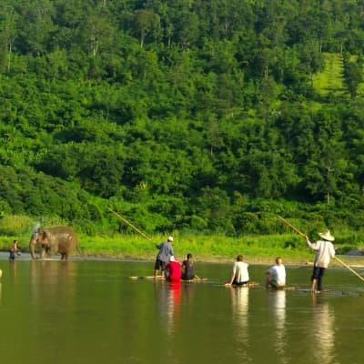 Balade à dos d'éléphants au Laos