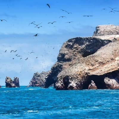 Excursion aux îles Ballestas