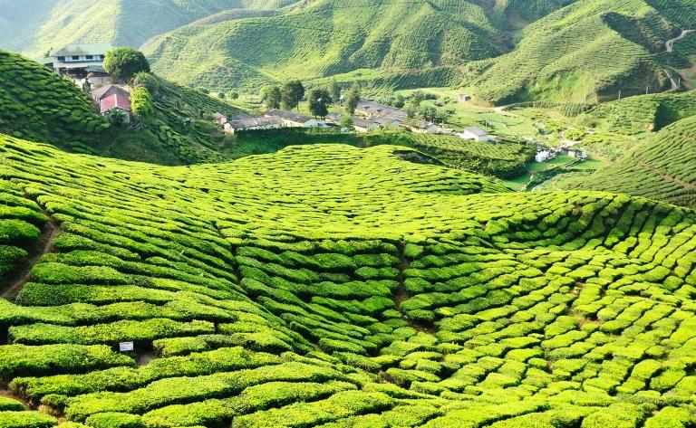 Sur la route des plantations de thé