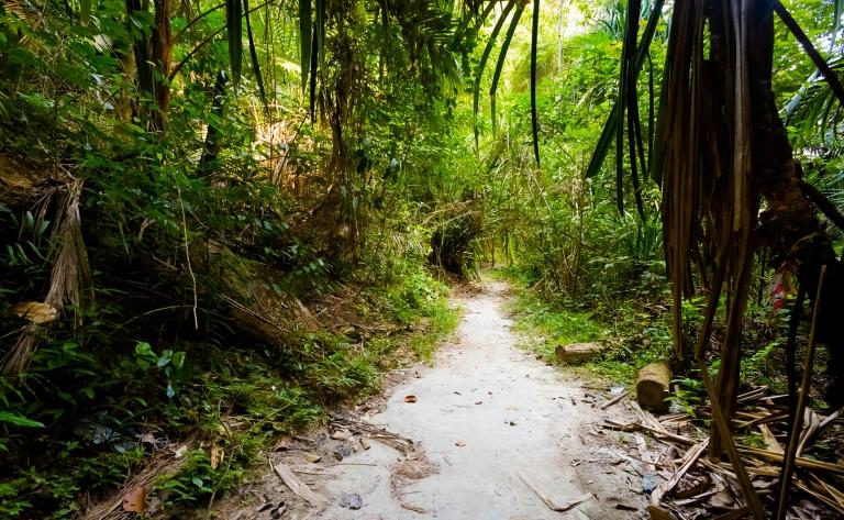 Dans la jungle de Pangkor