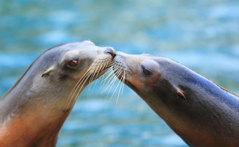 Croisière à la rencontre des dauphins et des otaries