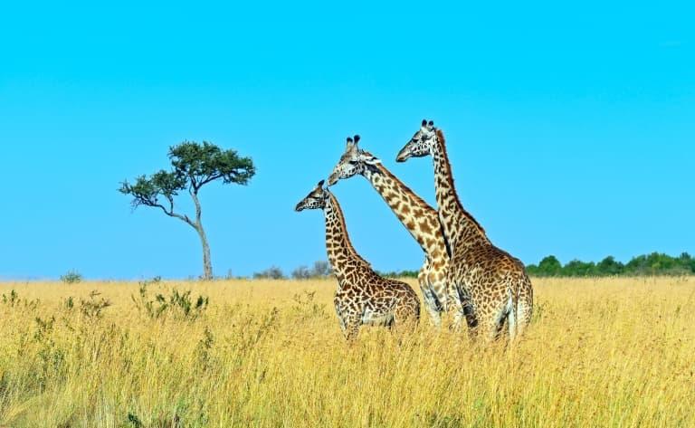 Langata Giraffe Center
