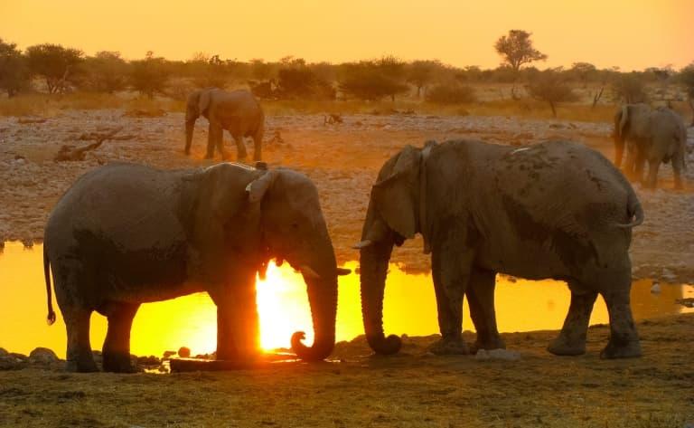L'expérience du safari de nuit à Etosha