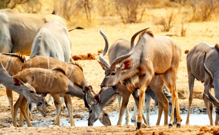 Safaris à Ongava Private Game Reserve