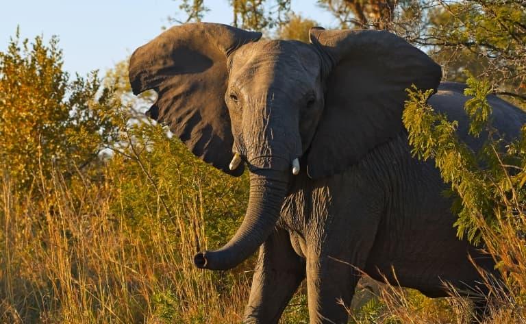 Sur les pas des animaux dans le fameux Parc Kruger