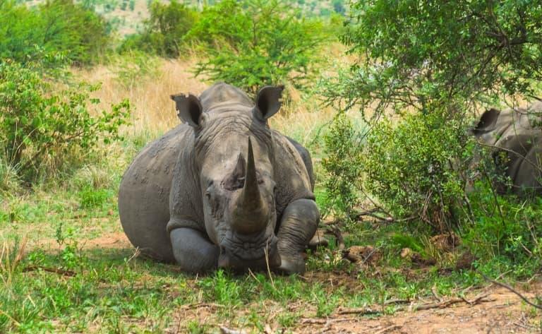 Deuxième journée de découverte au cœur du Pilanesberg