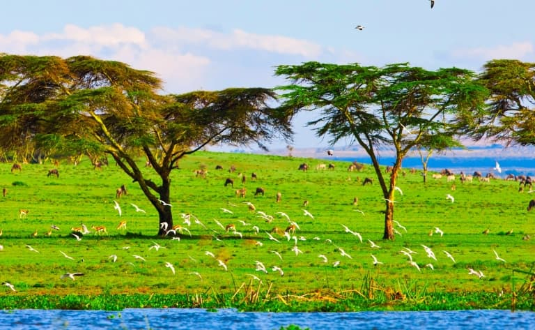 Excursion en bateau le long des rives fleuries du Lac Naivasha