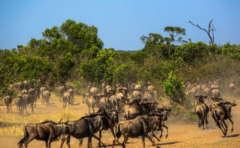 La grande migration du Serengeti