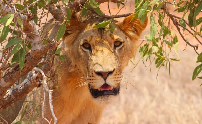 Safari dans l'extrême nord Serengeti