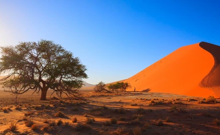 Immersion dans le Désert du Namib (340 km)