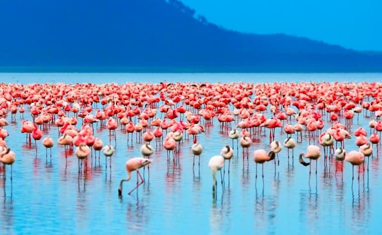 Le spectacle des flamants roses