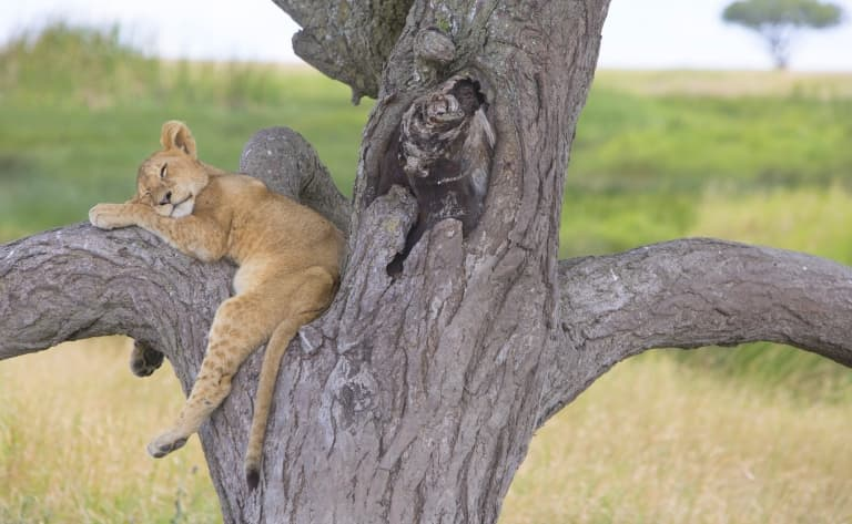 Expérience safari