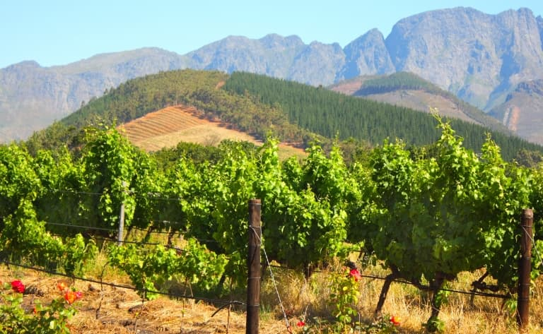 La route des vins