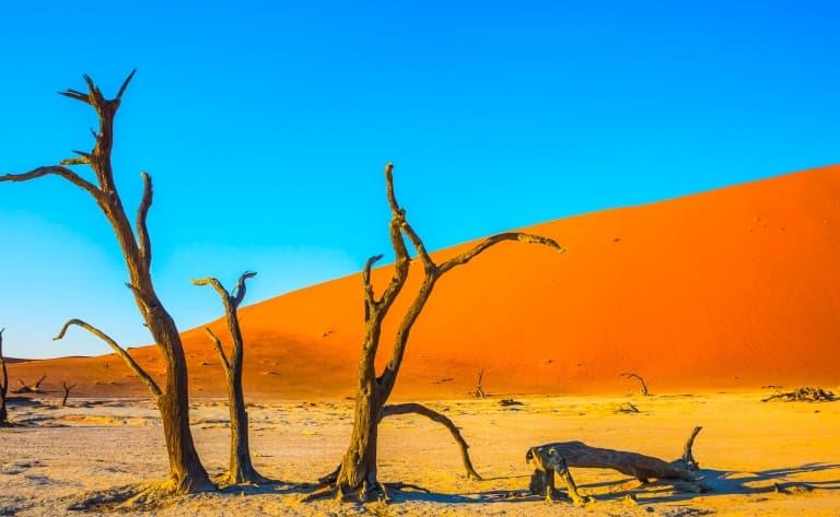Immersion dans le Désert du Namib (360 km)