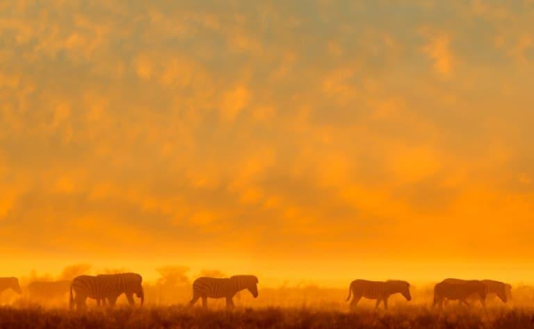 Journée entière de safari ( 160 km)