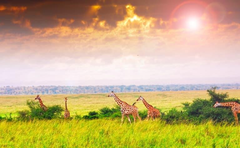 Dernier safari et retour en France