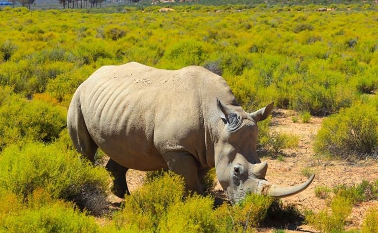 Route pour le Mlilwane Wildlife Sanctuary