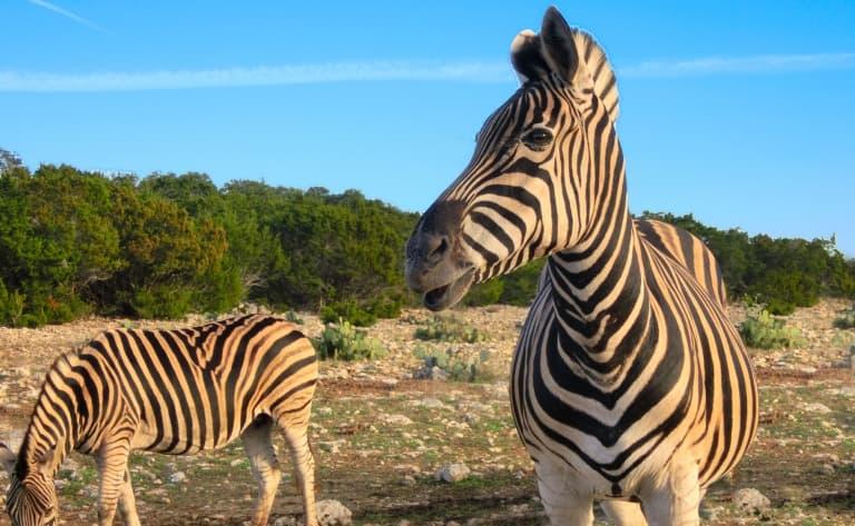 Vers la réserve luxuriante Hluhluwe-Imfolozi Park. 327 km.