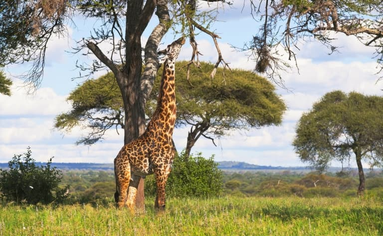 Bienvenue au royaume sauvage du Swaziland ! 264 km