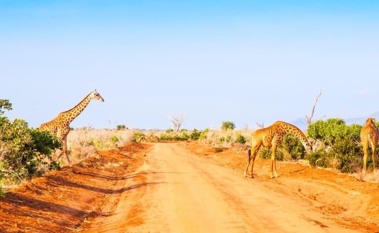 Safaris à Taita