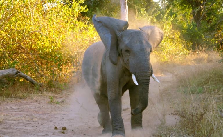 Safari d'exception au South Luangwa