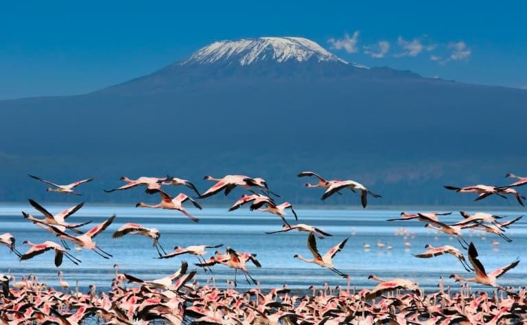 Arrivée à Amboseli ou les troupeaux paissant devant le Kilimandjaro