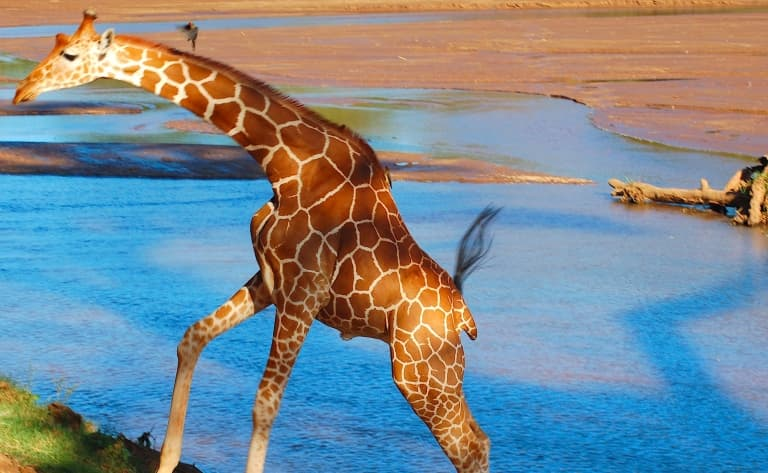 La réserve de Samburu, terre d'abondance et les sources de Buffalo Springs