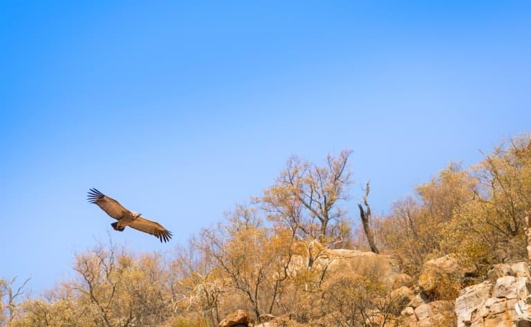 Croisière sur l'Okavango