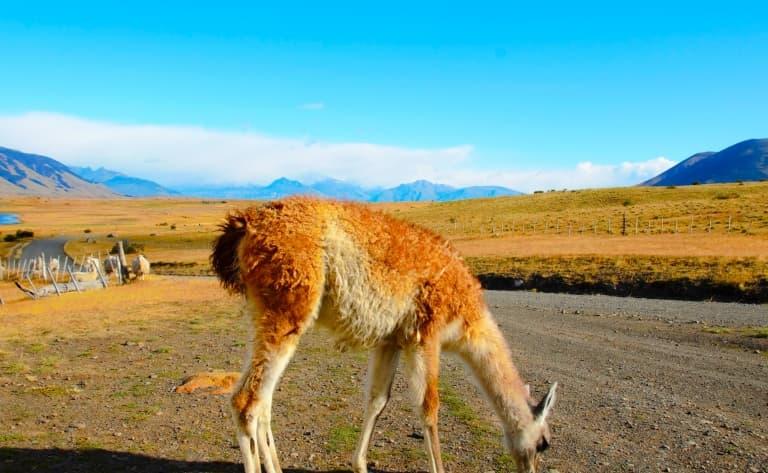Journée dans une estancia en Patagonie