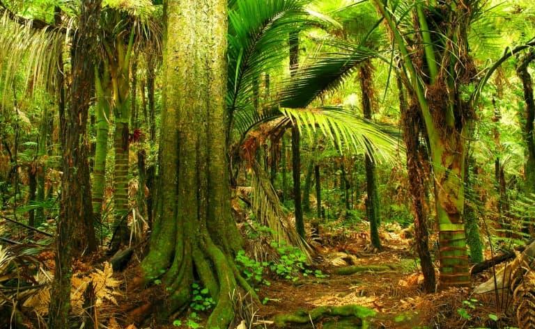 Randonnée découverte dans la  Puketi Forest