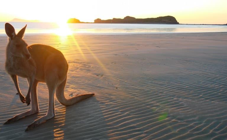 Une journée sur Kangaroo Island