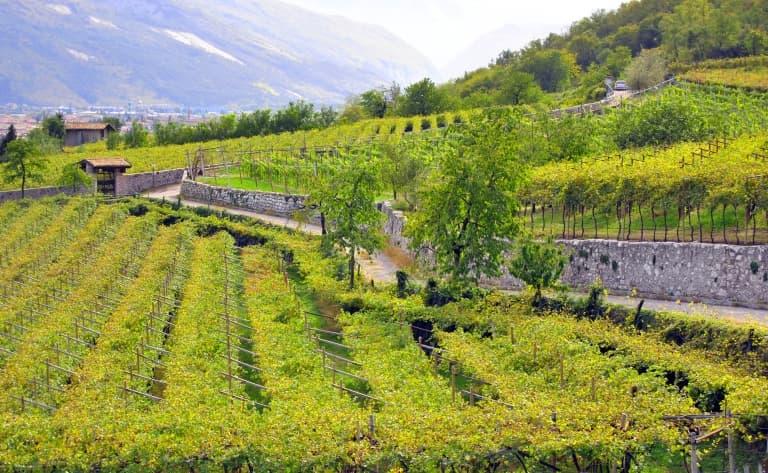 Flâneries et dégustations dans la Barossa Valley