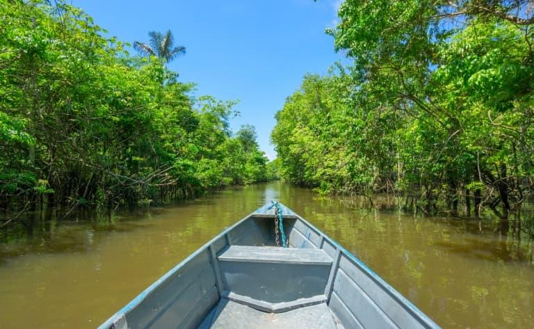 Faune et flore de l'Amazonie