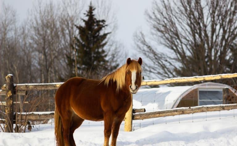 Balade à cheval sur la neige et soirée Réveillon.  Joyeuses fêtes !