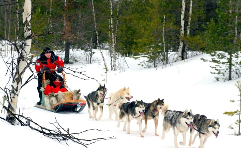 Balade traîneau à chiens (2 heures)