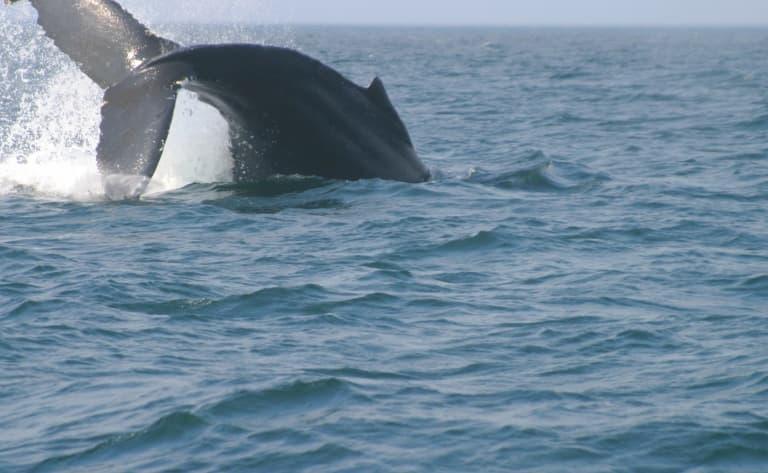 Croisière d'observation des baleines