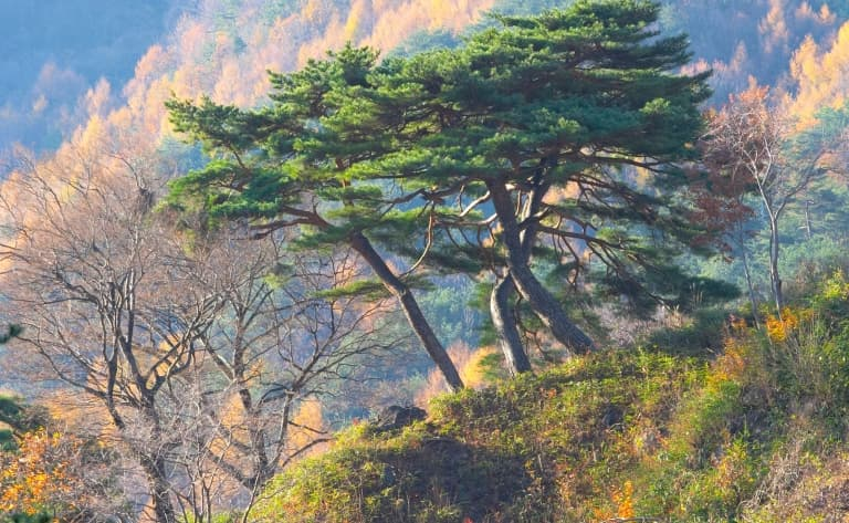 Jirisan, Le plus grand parc de Corée
