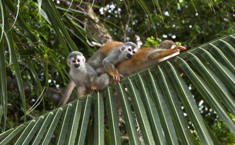 Le merveilleux Parc Naturel de Manuel Antonio !