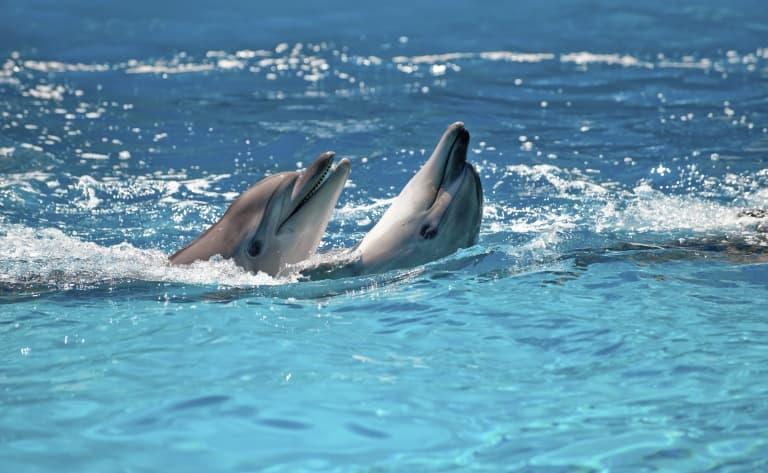 La Pura Vida au pays des dauphins !