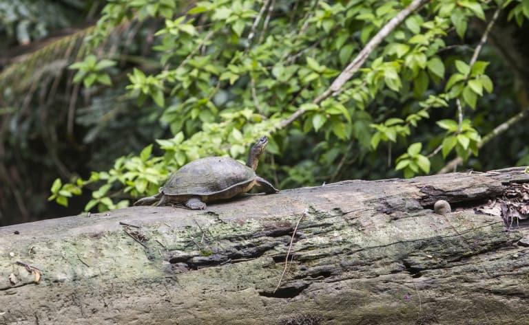Dessine moi une tortue…