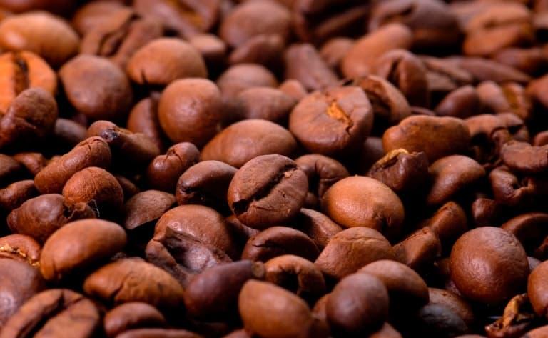 Découverte des plantations de café