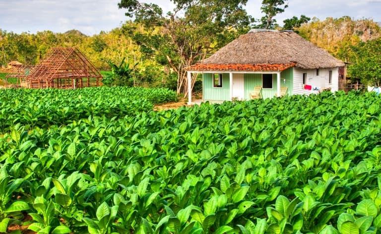 Les anciennes plantations de café et los baños de San Juan