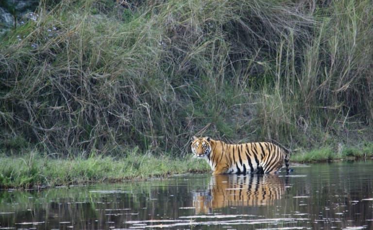 Découverte du Parc National de Chitwan