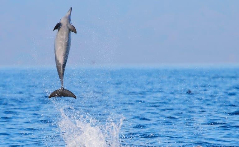Rencontre avec les dauphins et baignades dans les sources
