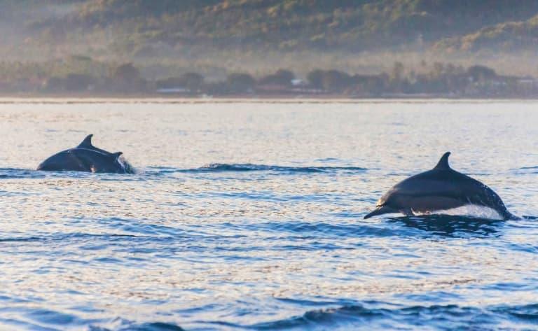 Rencontre avec les dauphins, baignade dans les sources d'eau chaude et cascades.