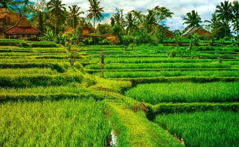 Journée à Ubud