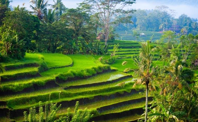 Balade dans les rizières, Tirtagangga, Goa Lawah