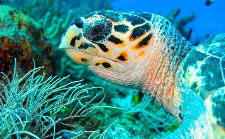 Snorkeling et nage avec les tortues