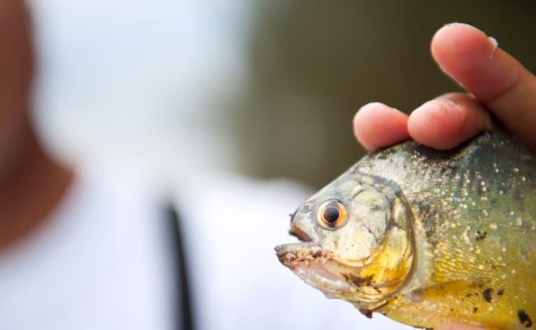 Pêche et cours de cuisine en Amazonie