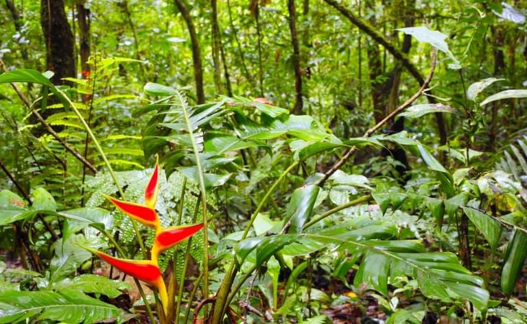 Une journée en forêt amazonienne